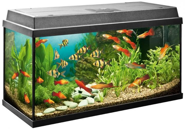 Как делают аквариумы (видео)