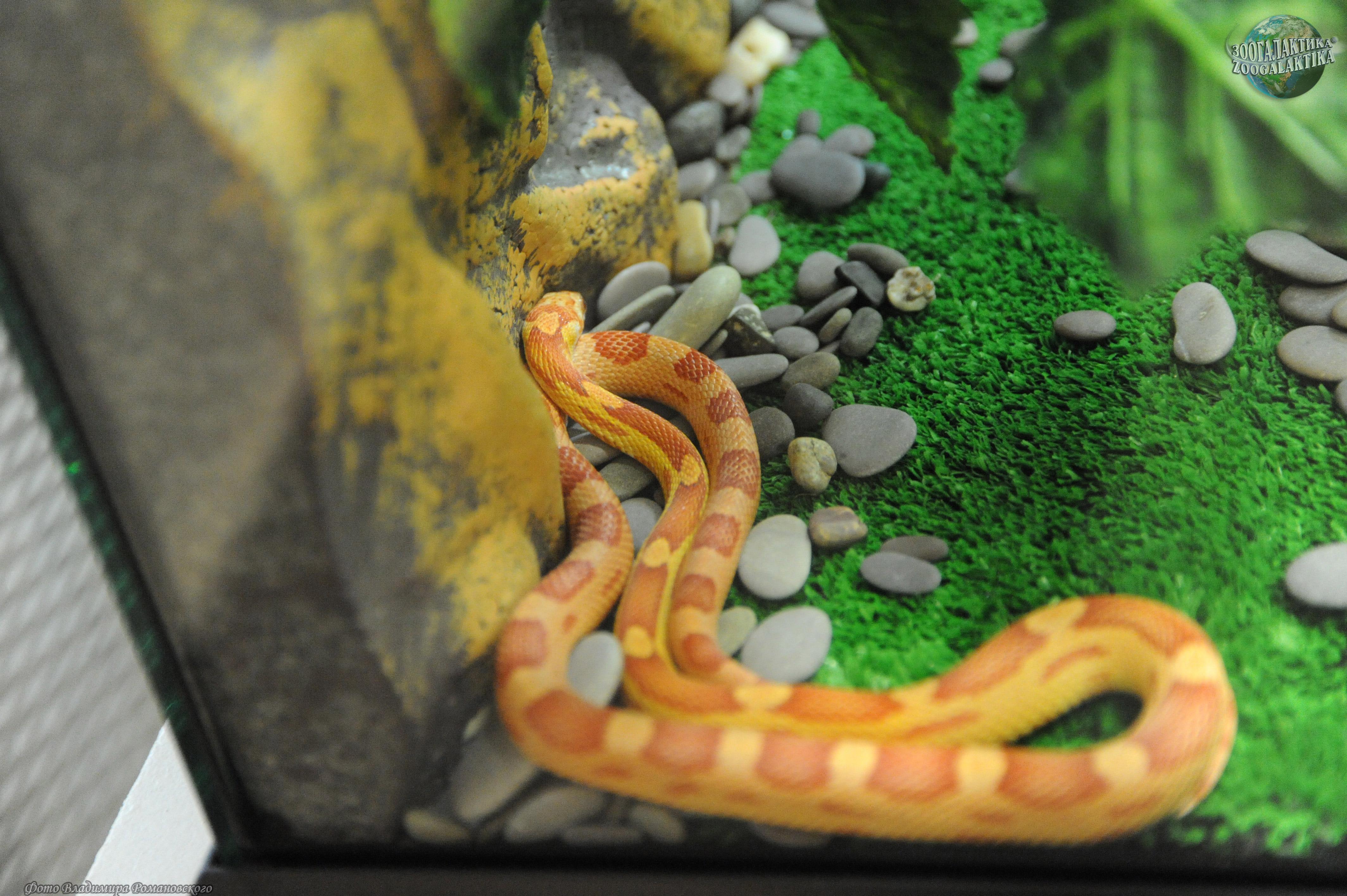 Условия содержания змеи в домашних условиях 565