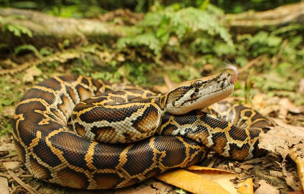 Условия содержания змеи в домашних условиях 411